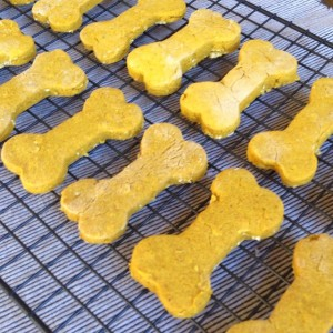Tuesday Cook Off ~ Peanut Butter Pumpkin Dog Treats