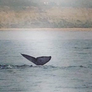 Whale Watching on our trip